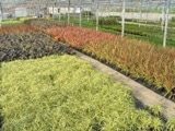 Hortech Wholesale Nurseries container production